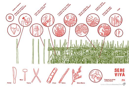 Como-hacer-una-sebe-viva-infografia-by-Javi-de-Castro-FCAYC-blog