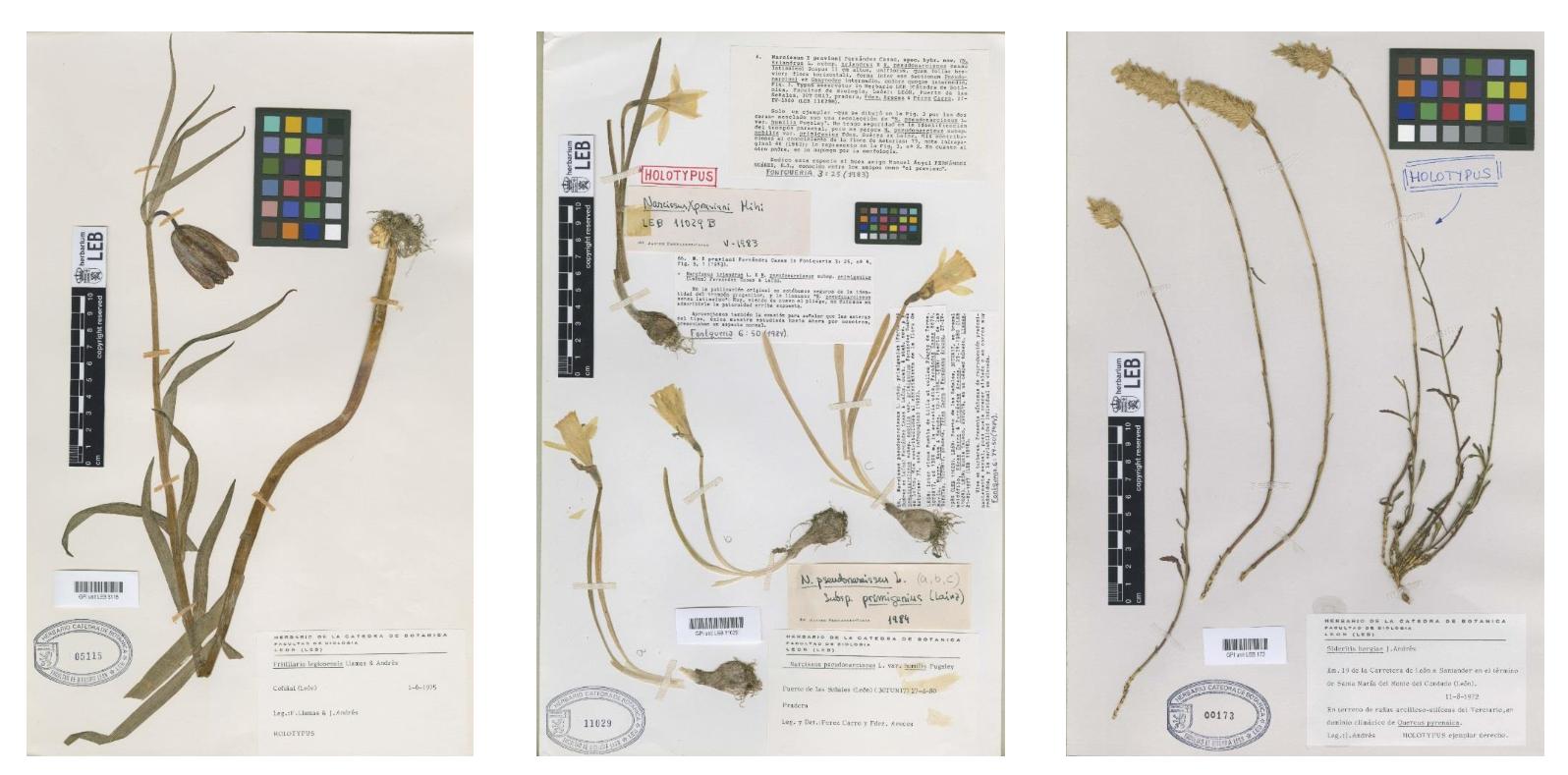 Herbarium 2020 - fundacion cerezales - fcayc