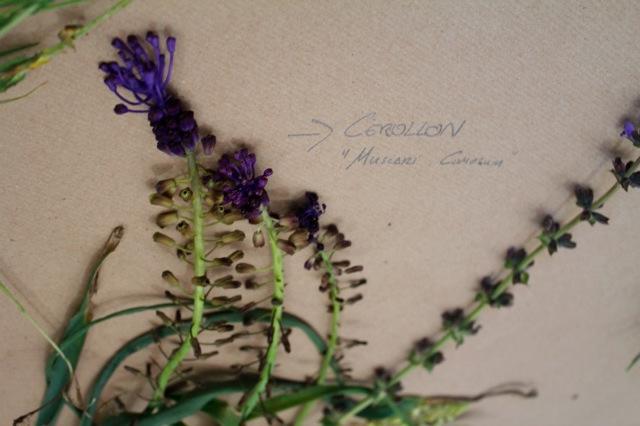 Herbarium Legados vivos 2019 - FCAYC