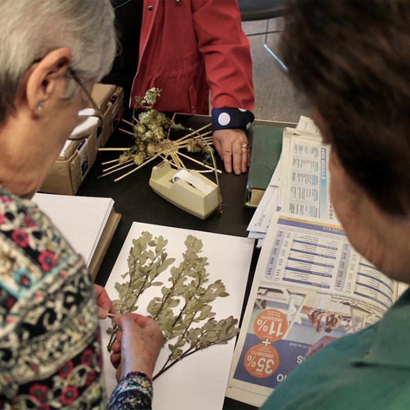Herbarium - legados vivos - herbario manuscrito - fundacion cerezales - fcayc- home