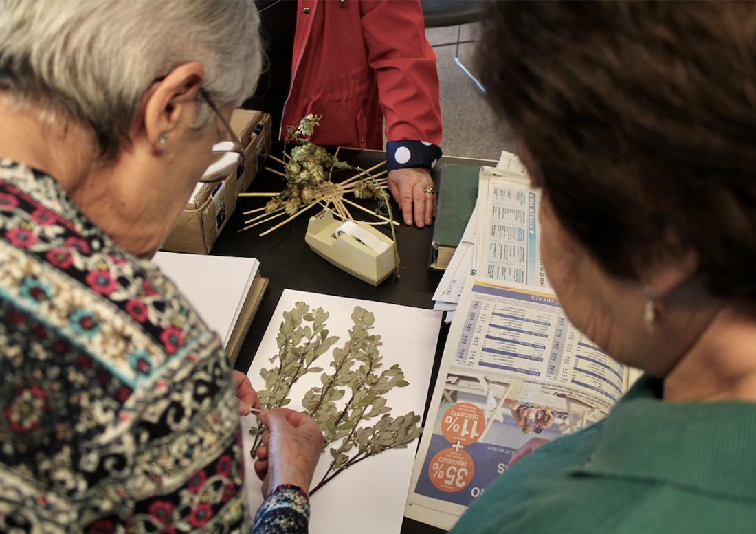 Herbarium - legados vivos - herbario manuscrito - fundacion cerezales - fcayc-web
