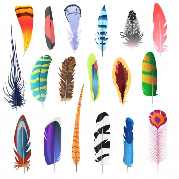 conjunto-plumas-ave_88272-208