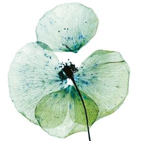 ciclos FCAYC herbarium
