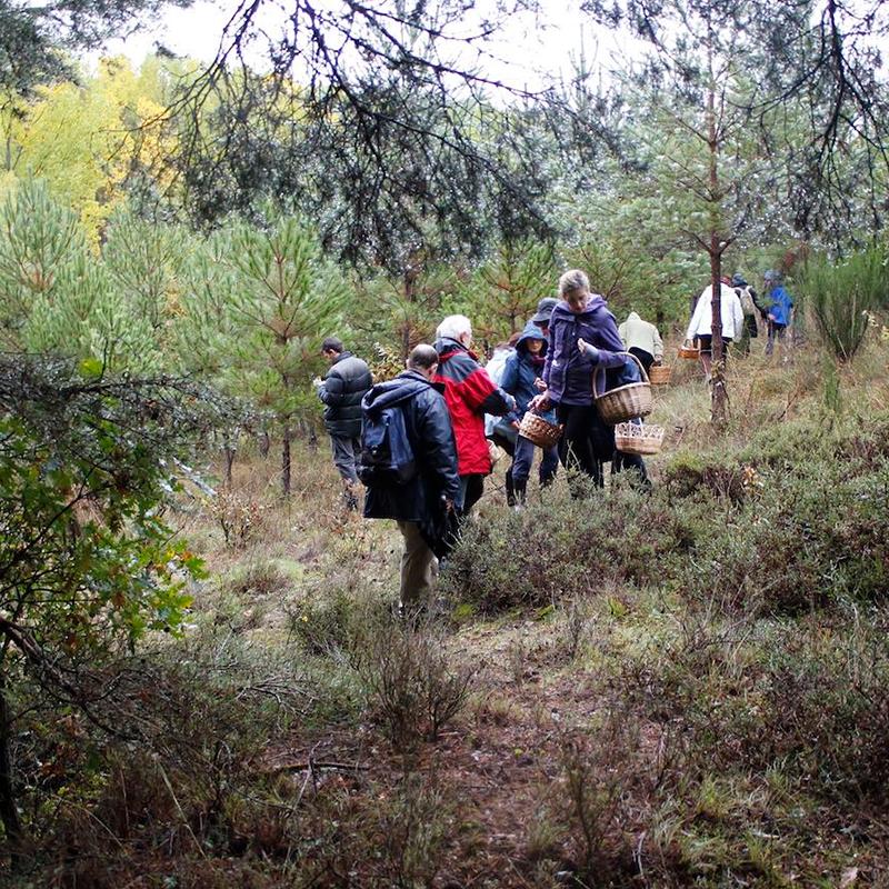micologia-tres-bosques-entretiempo-oct-2020_fundacion_cerezales