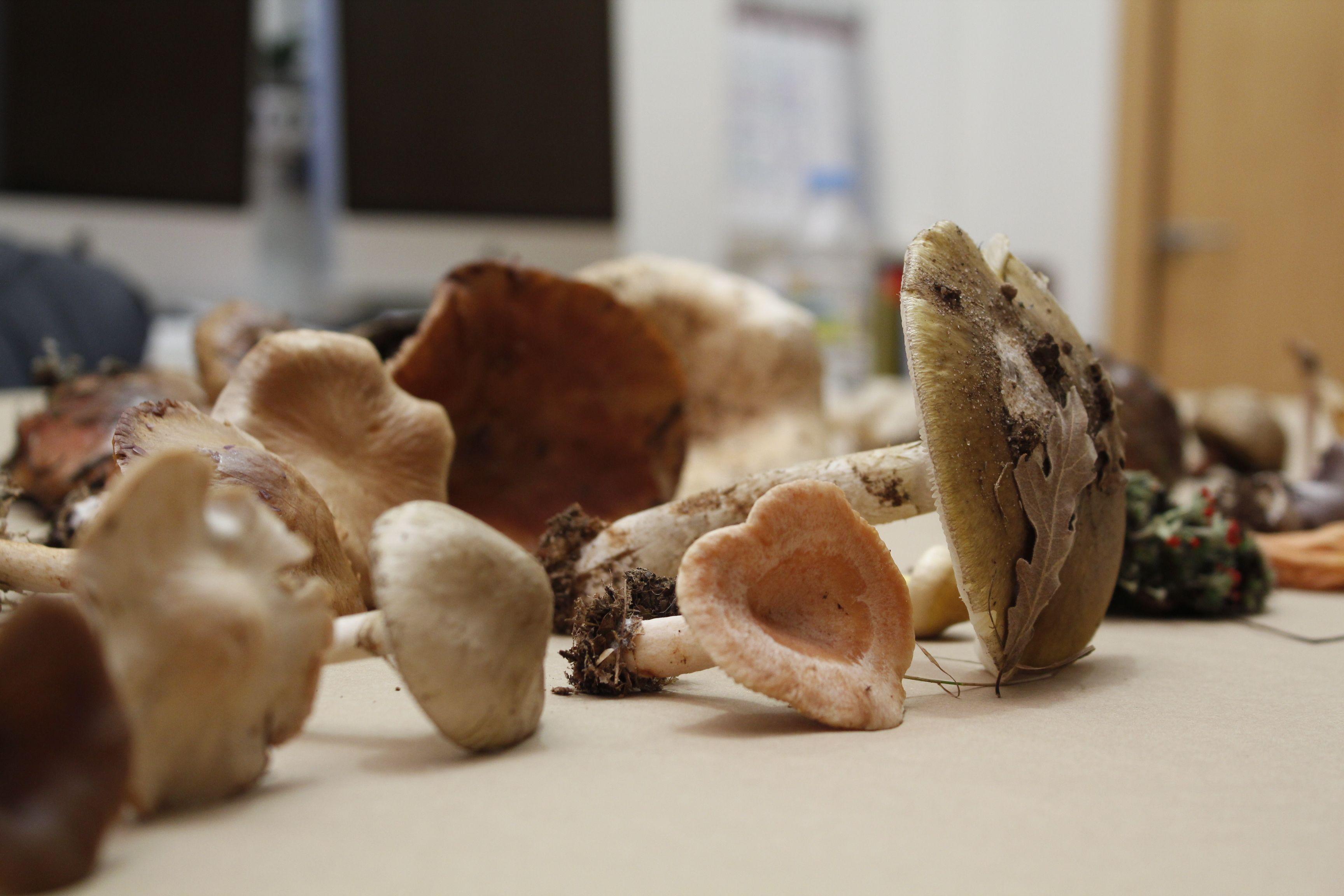 otono micologico _ 2014 _ fundacion cerezales _18
